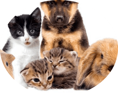 Huisdieren en mechanische ventilatie